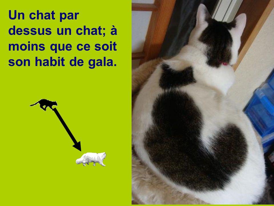 Un chat par dessus un chat; à moins que ce soit son habit de gala.