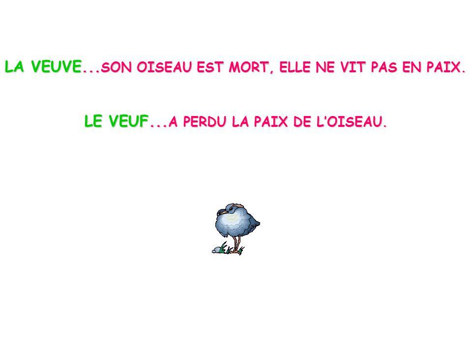 LE VEUF...A PERDU LA PAIX DE L'OISEAU.