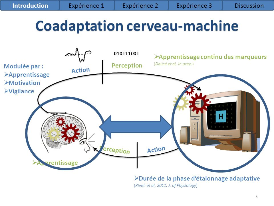 Coadaptation cerveau-machine