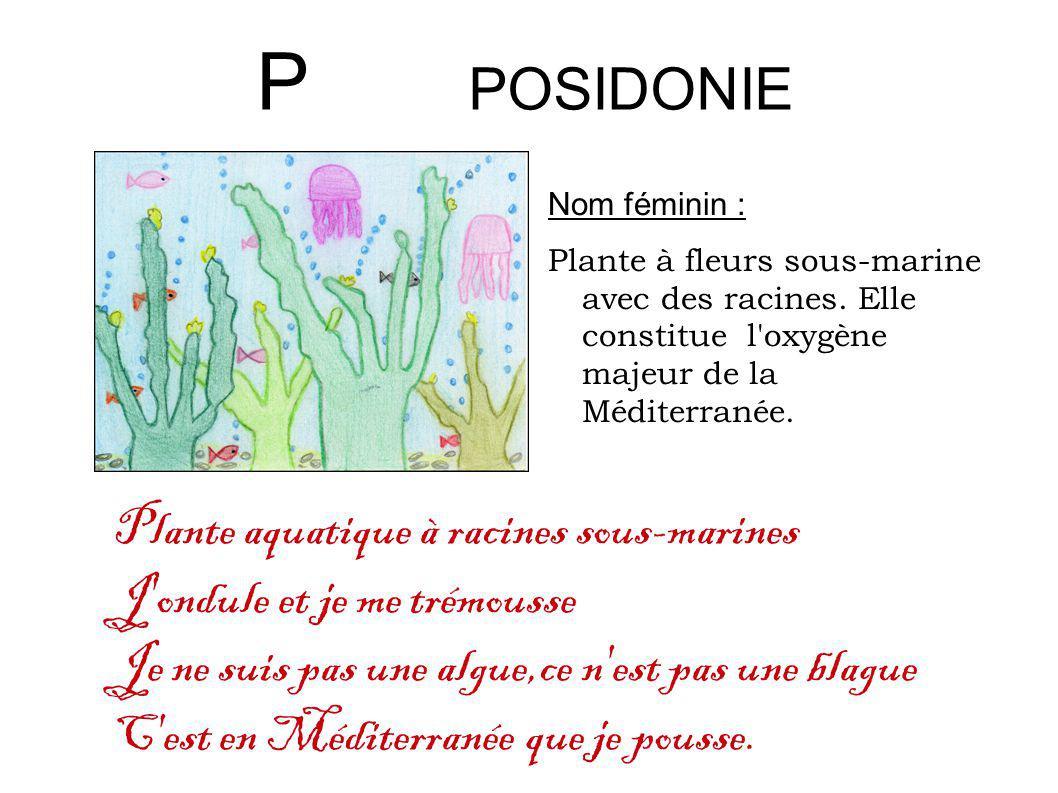P POSIDONIE Plante aquatique à racines sous-marines