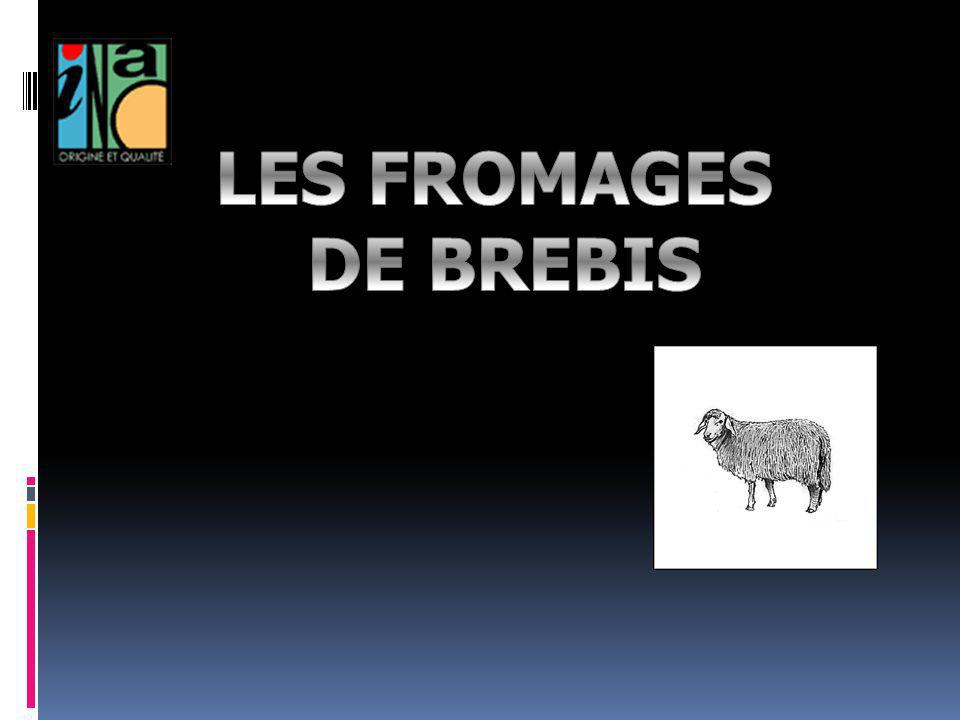 LES FROMAGES DE BREBIS