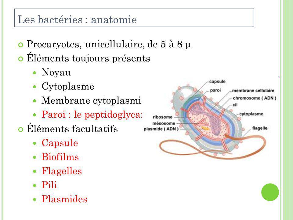 Les bactéries : anatomie