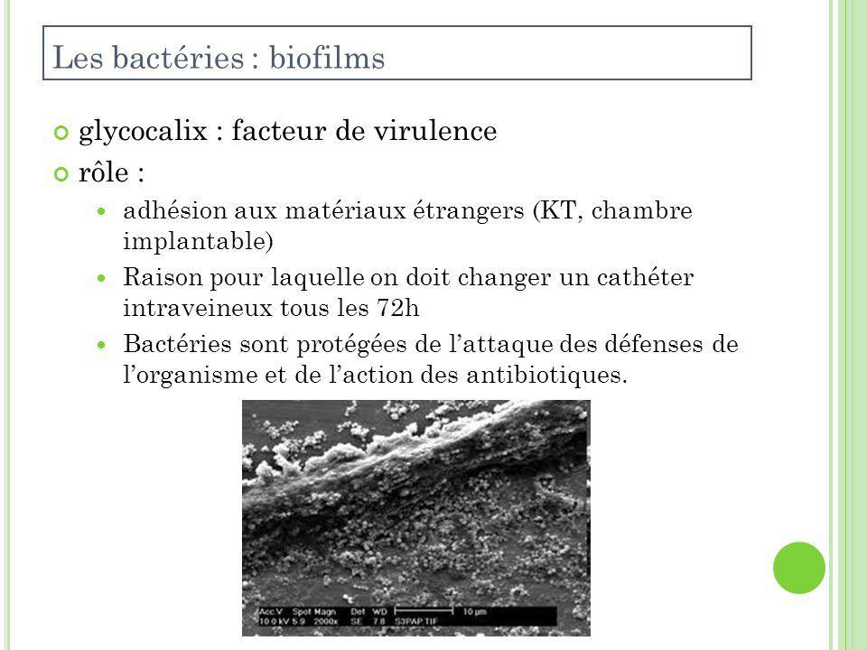 Les bactéries : biofilms