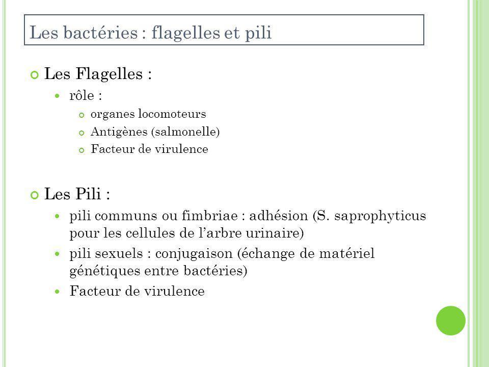 Les bactéries : flagelles et pili
