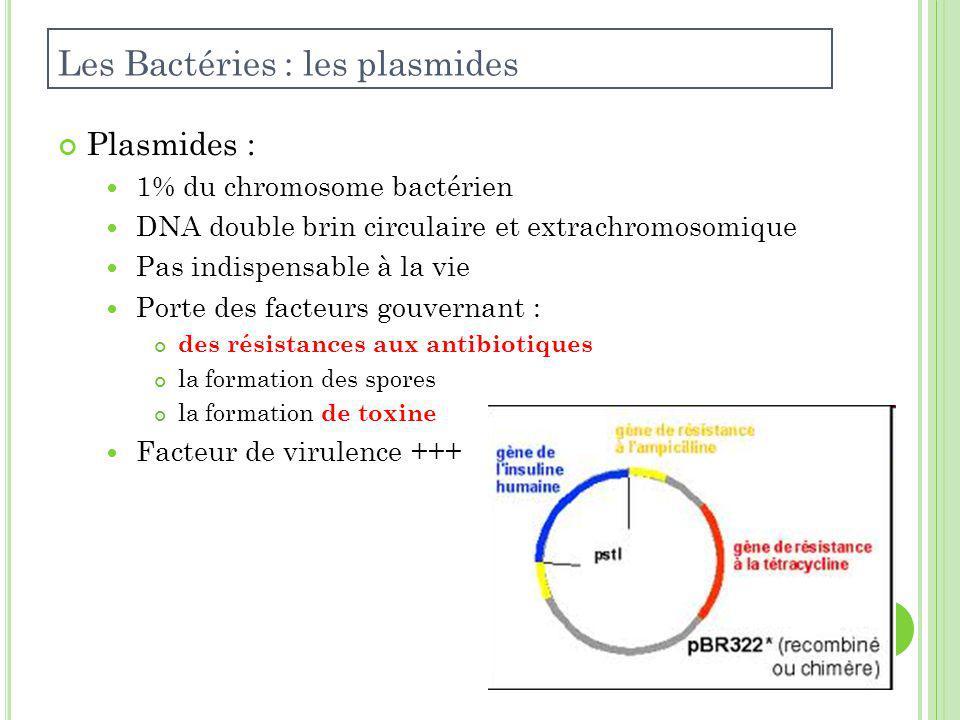 Les Bactéries : les plasmides