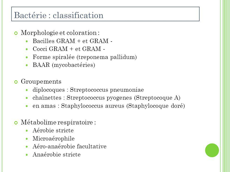 Bactérie : classification