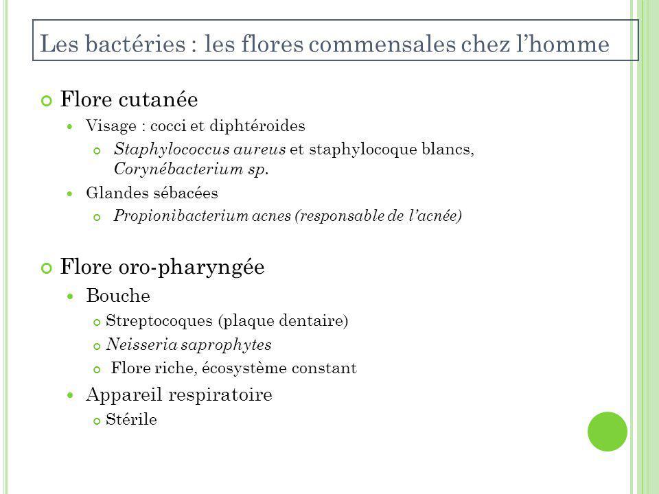 Les bactéries : les flores commensales chez l'homme