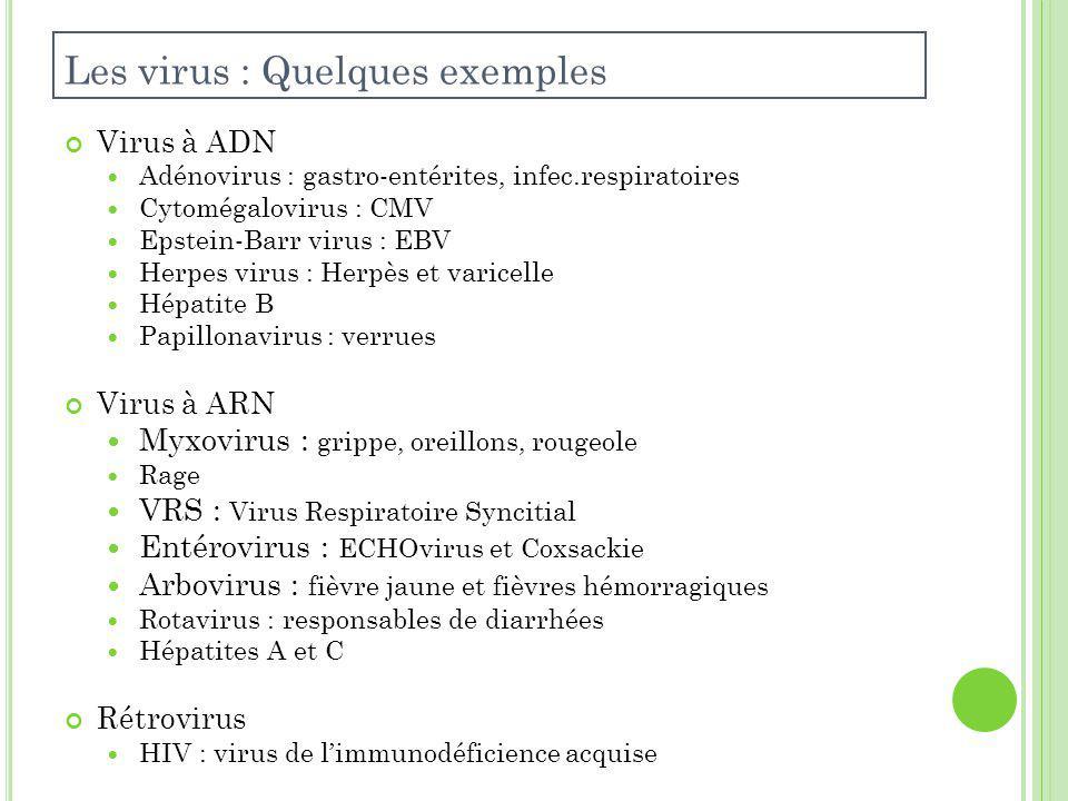 Les virus : Quelques exemples