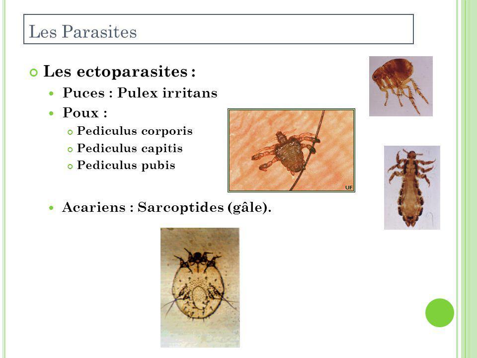 Les Parasites Les ectoparasites : Puces : Pulex irritans Poux :