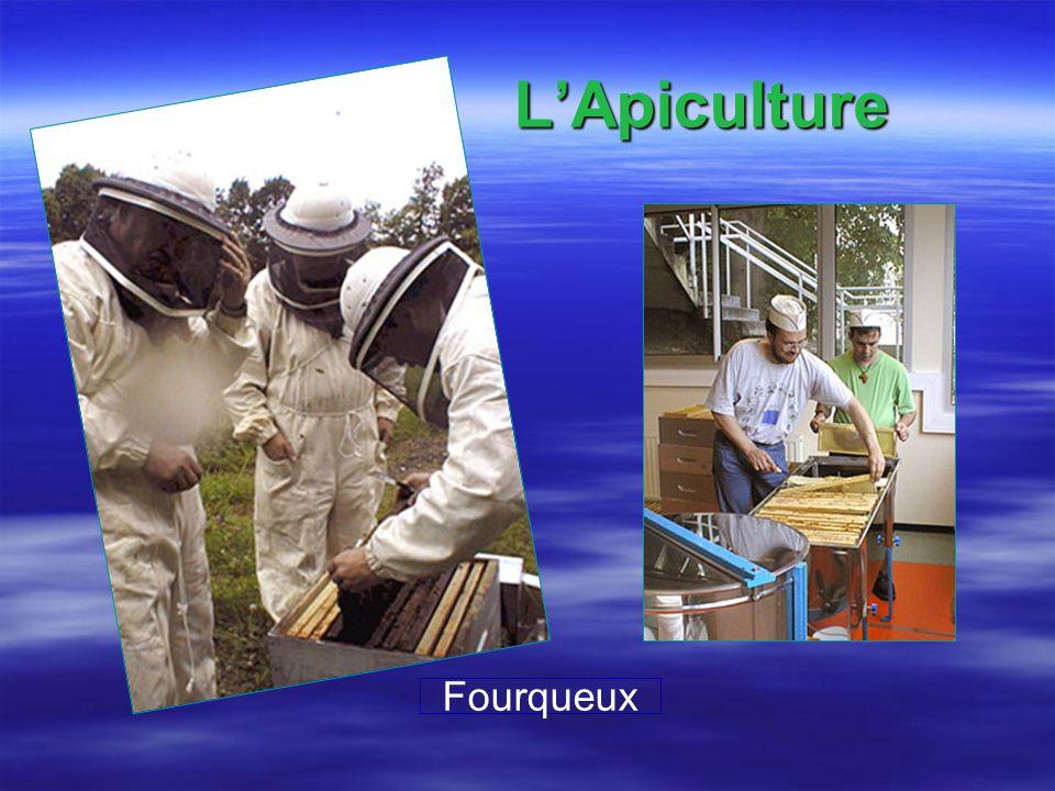 L'Apiculture Fourqueux