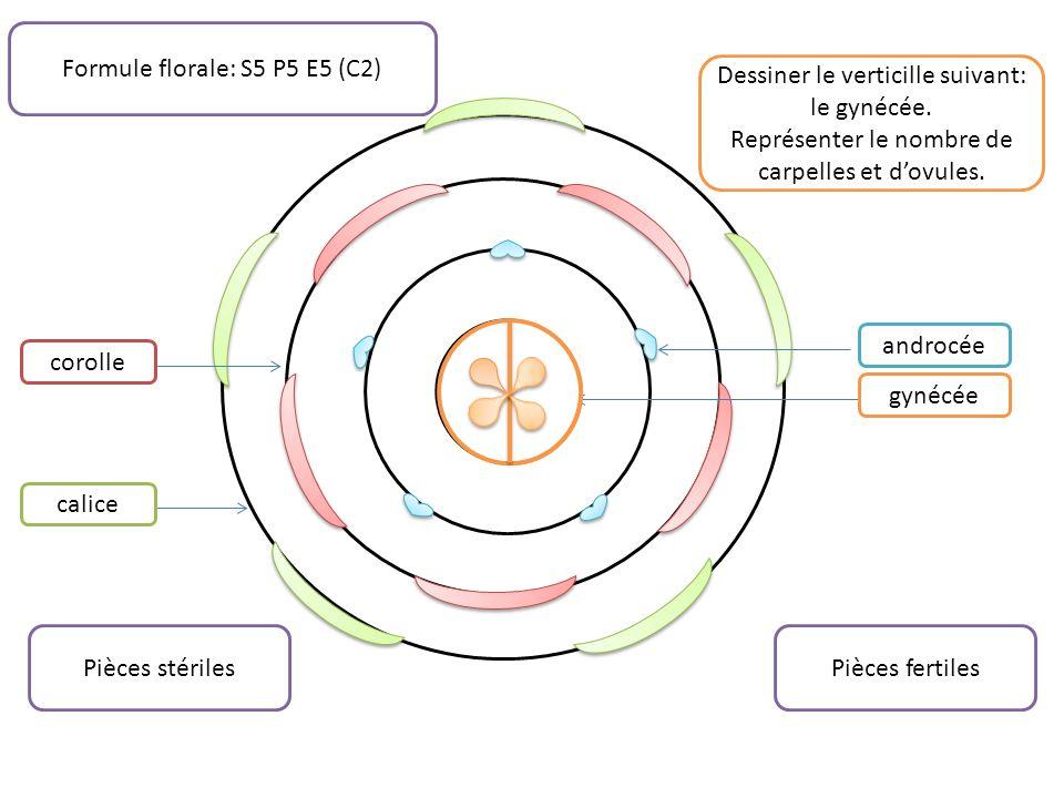 Formule florale: S5 P5 E5 (C2)