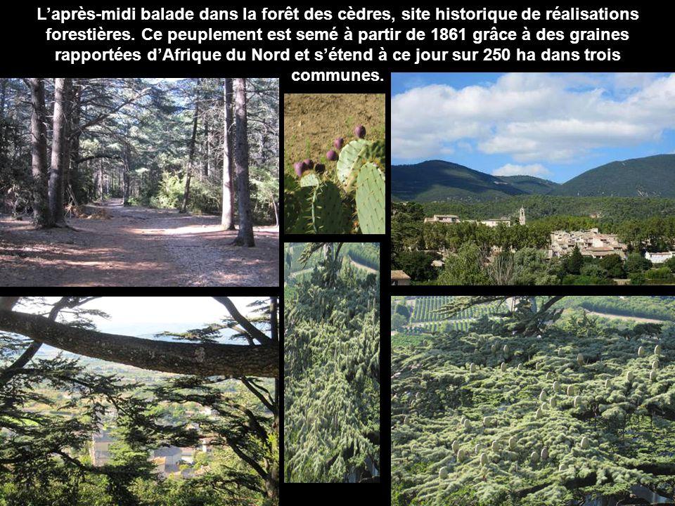 L'après-midi balade dans la forêt des cèdres, site historique de réalisations forestières.
