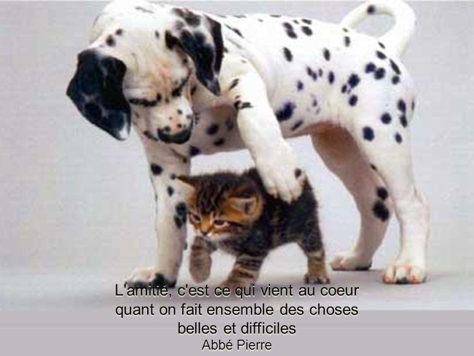 L amitié, c est ce qui vient au coeur quant on fait ensemble des choses belles et difficiles