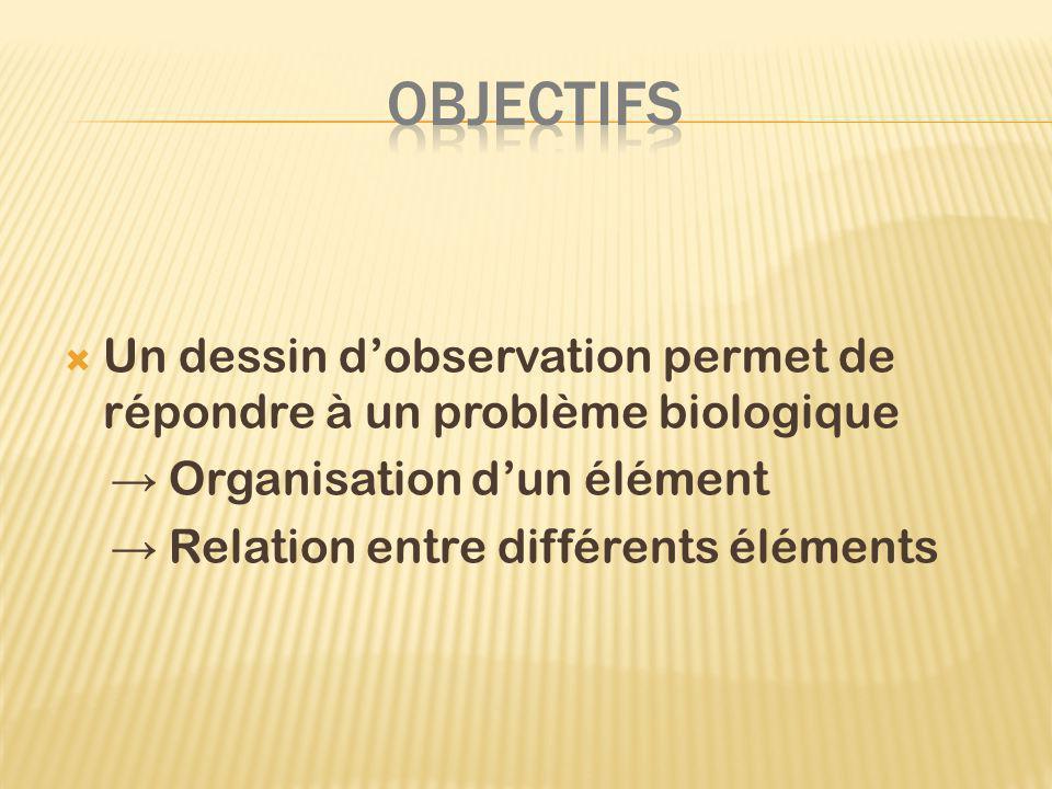 OBJECTIFS Un dessin d'observation permet de répondre à un problème biologique. → Organisation d'un élément.