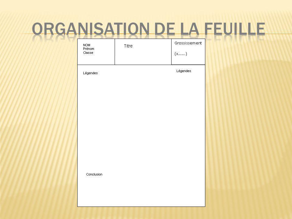 ORGANISATION DE LA FEUILLE