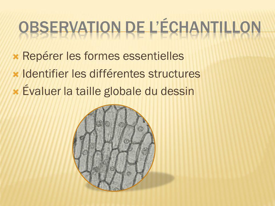 OBSERVATION DE L'échantillon