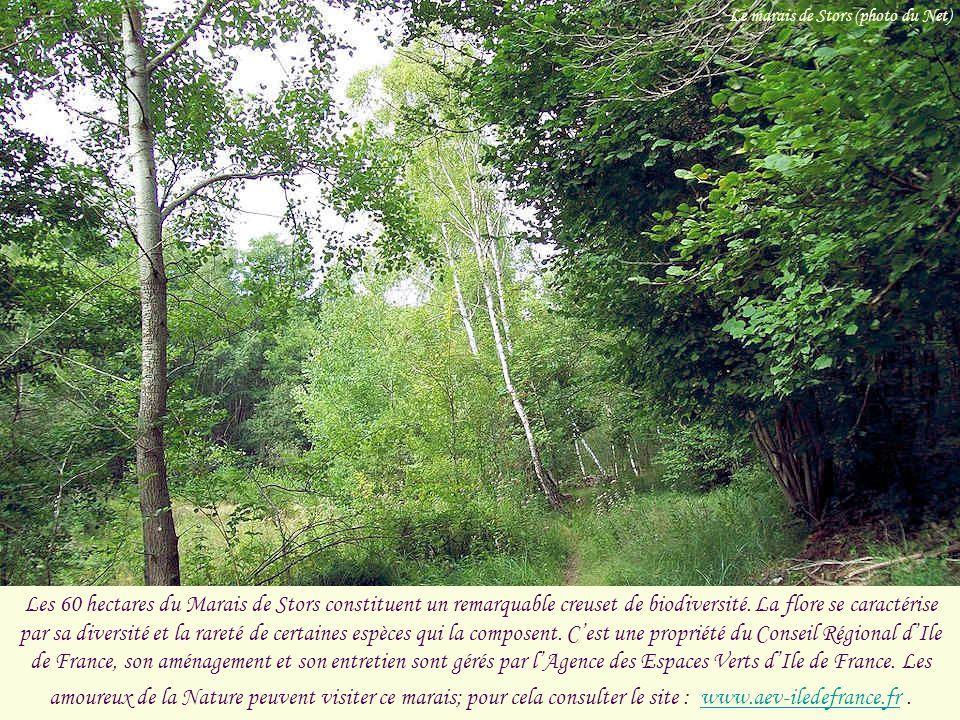 Le marais de Stors (photo du Net)