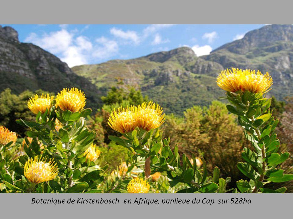 Botanique de Kirstenbosch en Afrique, banlieue du Cap sur 528ha