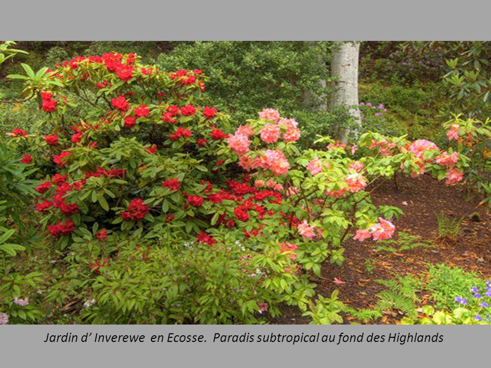 Jardin d' Inverewe en Ecosse. Paradis subtropical au fond des Highlands