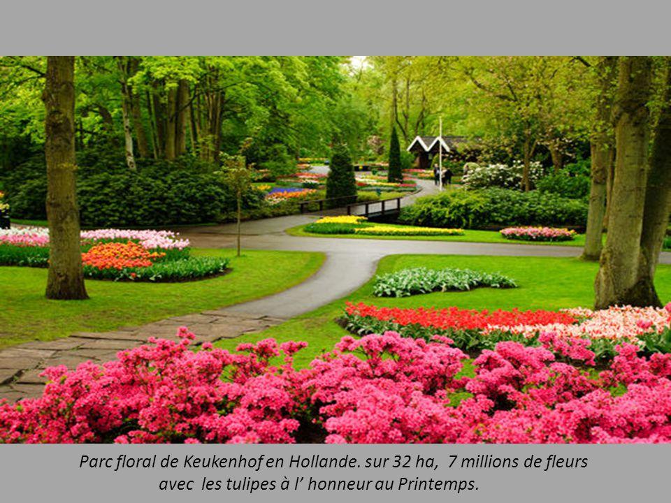 Parc floral de Keukenhof en Hollande. sur 32 ha, 7 millions de fleurs