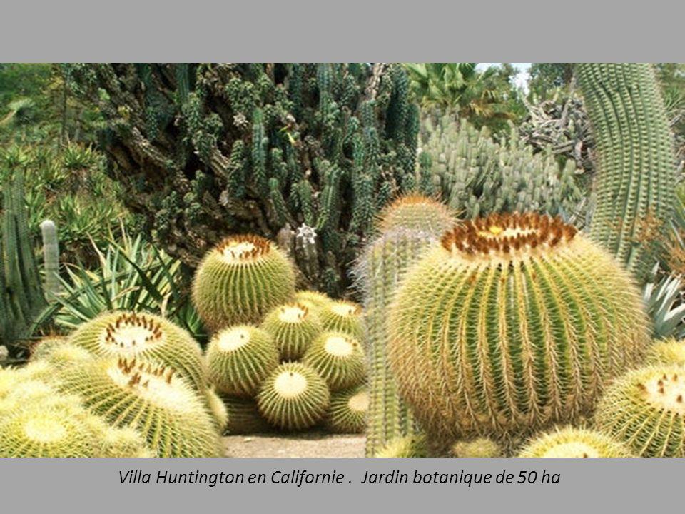 Villa Huntington en Californie . Jardin botanique de 50 ha