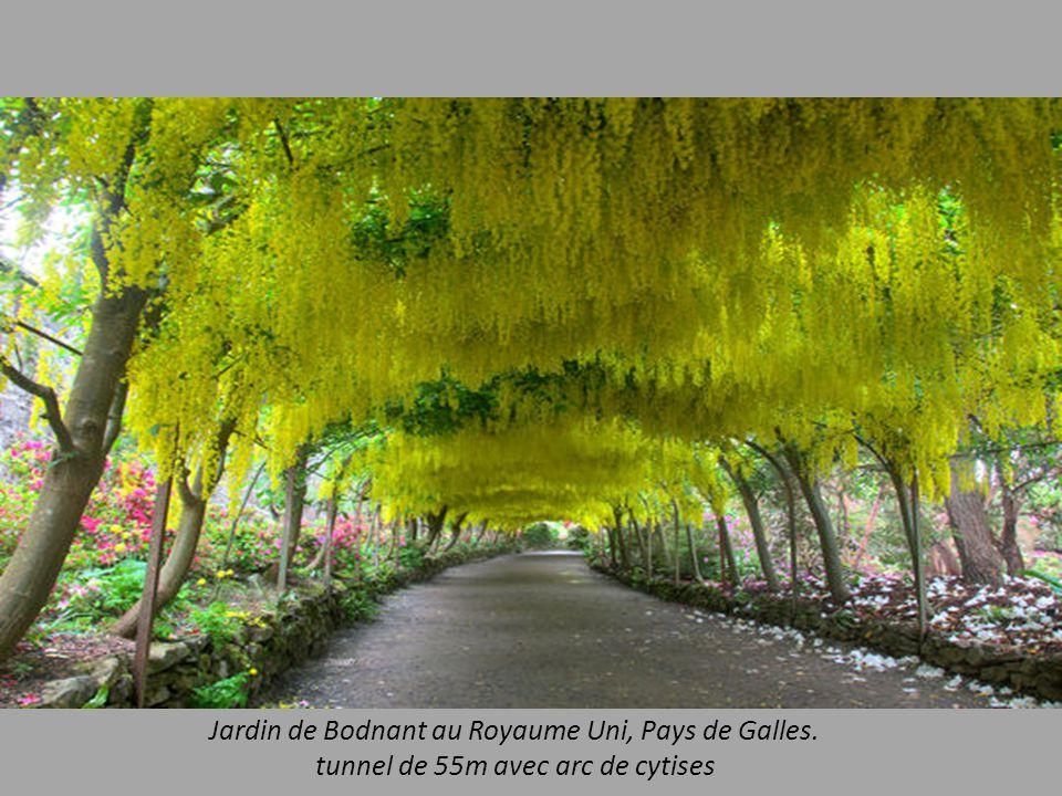 Jardin de Bodnant au Royaume Uni, Pays de Galles.