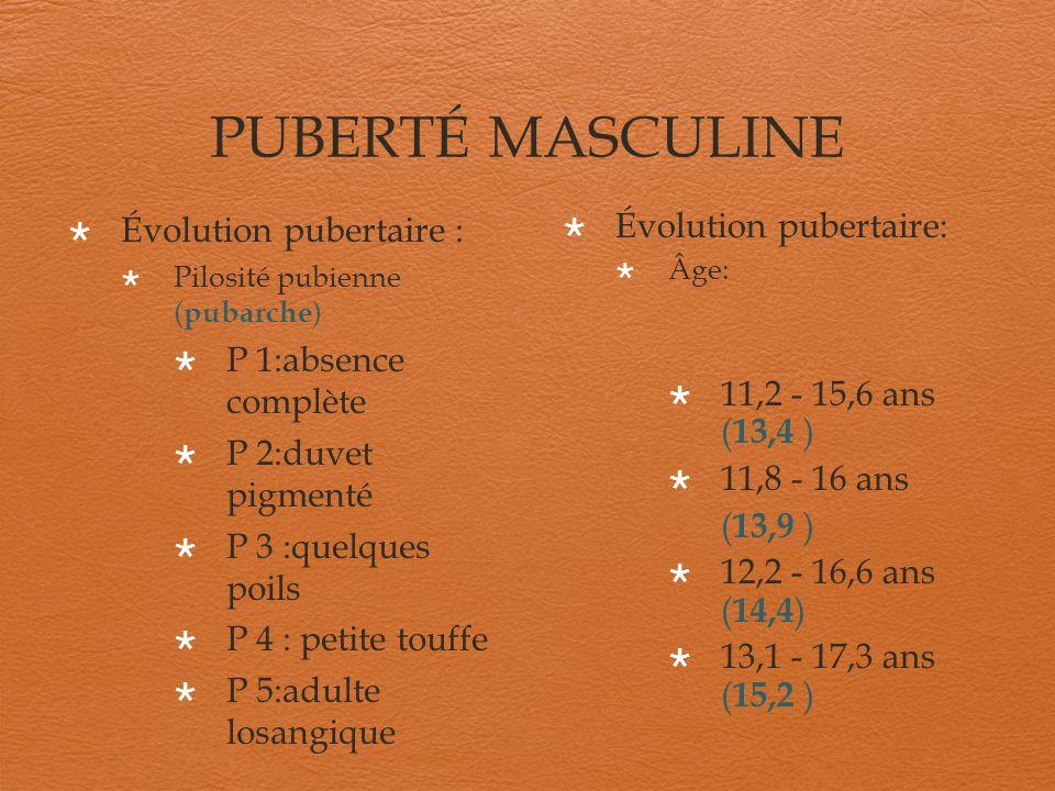 PUBERTÉ MASCULINE Évolution pubertaire : P 1:absence complète