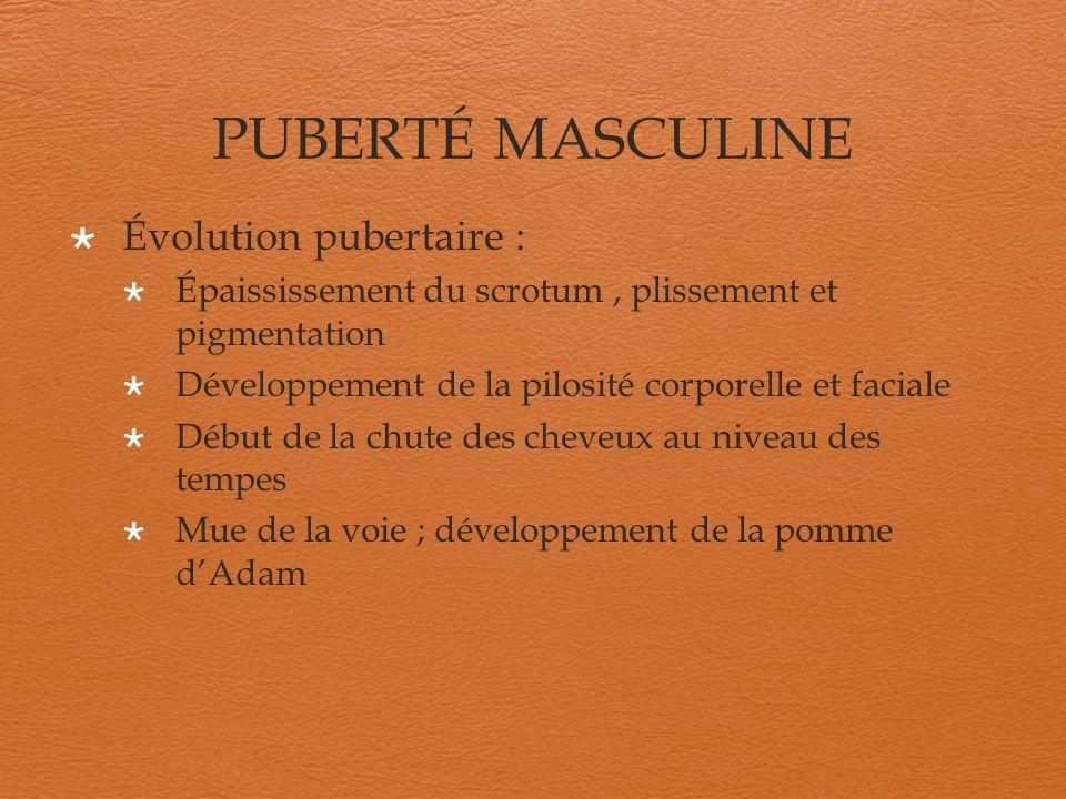 PUBERTÉ MASCULINE Évolution pubertaire :