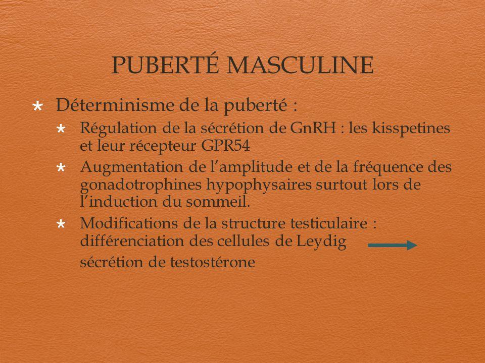 PUBERTÉ MASCULINE Déterminisme de la puberté :