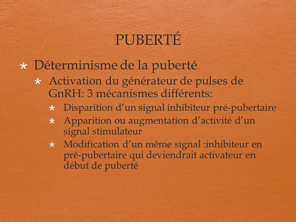 PUBERTÉ Déterminisme de la puberté