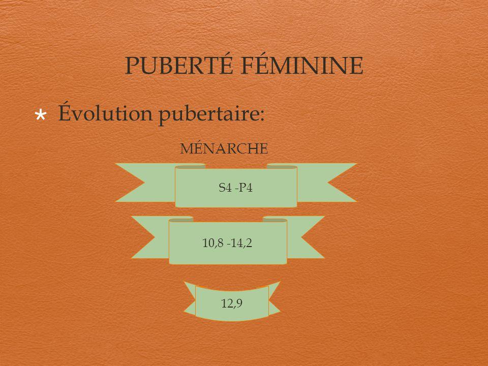 PUBERTÉ FÉMININE Évolution pubertaire: MÉNARCHE S4 -P4 10,8 -14,2 12,9