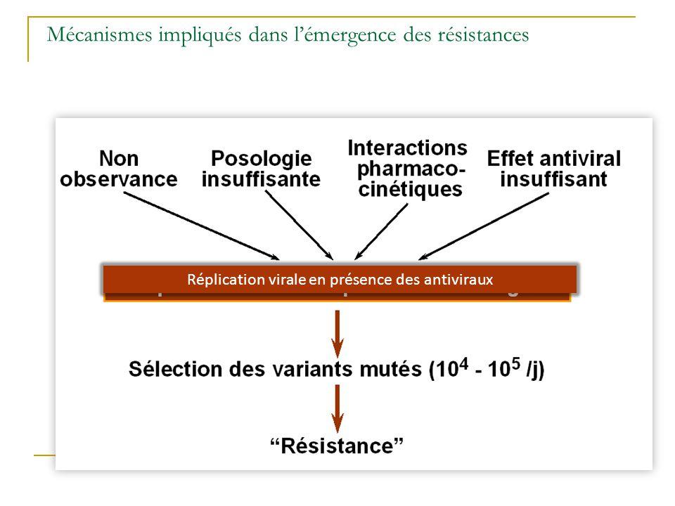 Mécanismes impliqués dans l'émergence des résistances