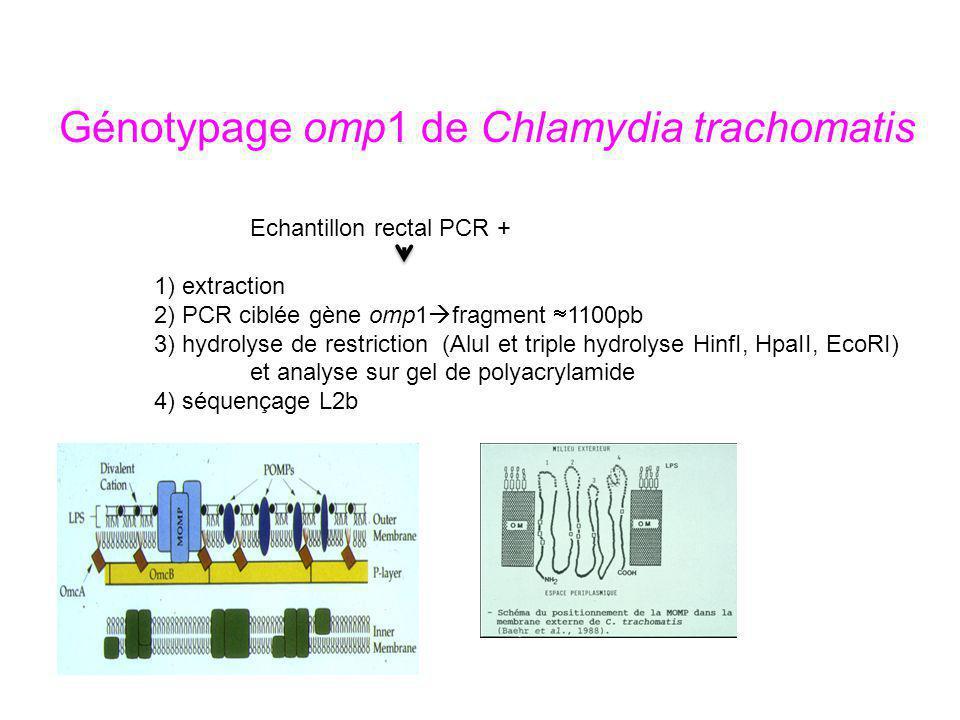 Génotypage omp1 de Chlamydia trachomatis