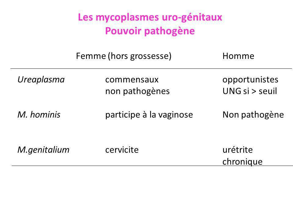 Les mycoplasmes uro-génitaux