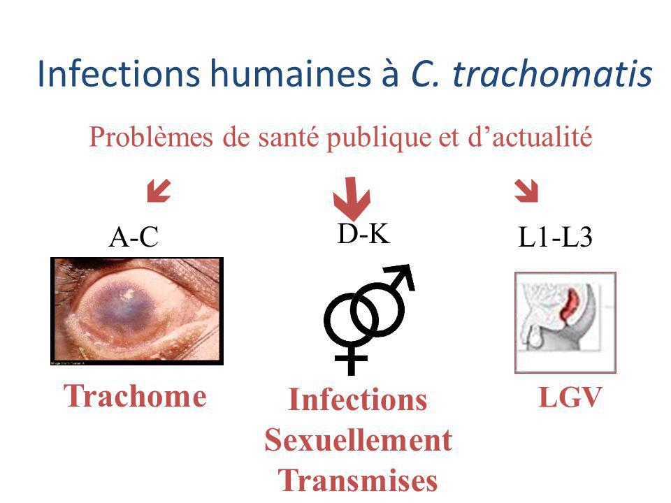  Infections humaines à C. trachomatis   Trachome Infections
