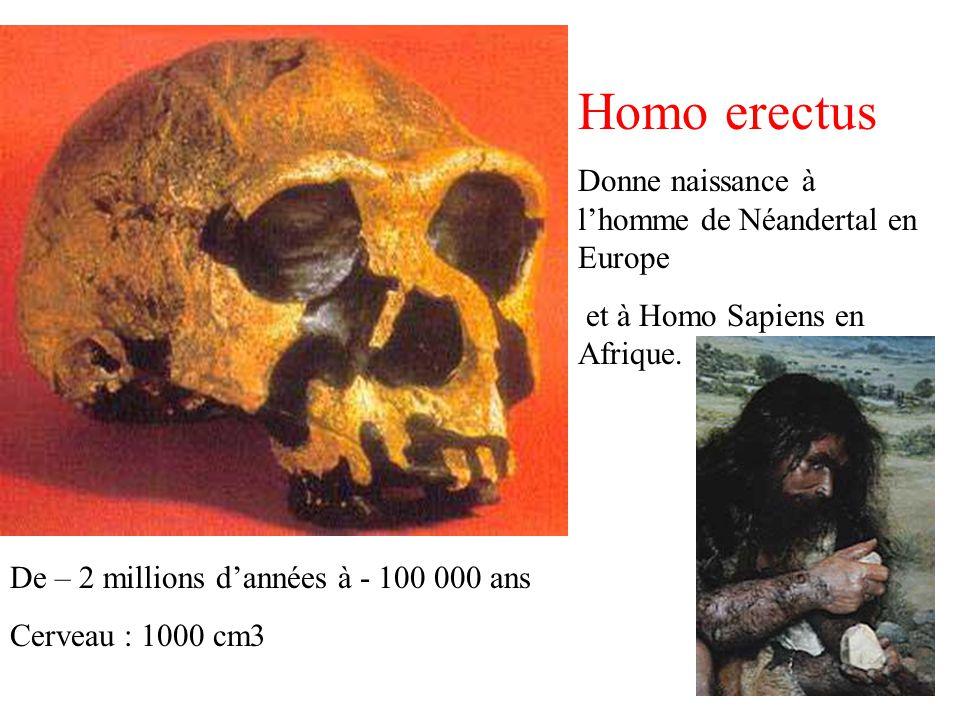 Homo erectus Donne naissance à l'homme de Néandertal en Europe