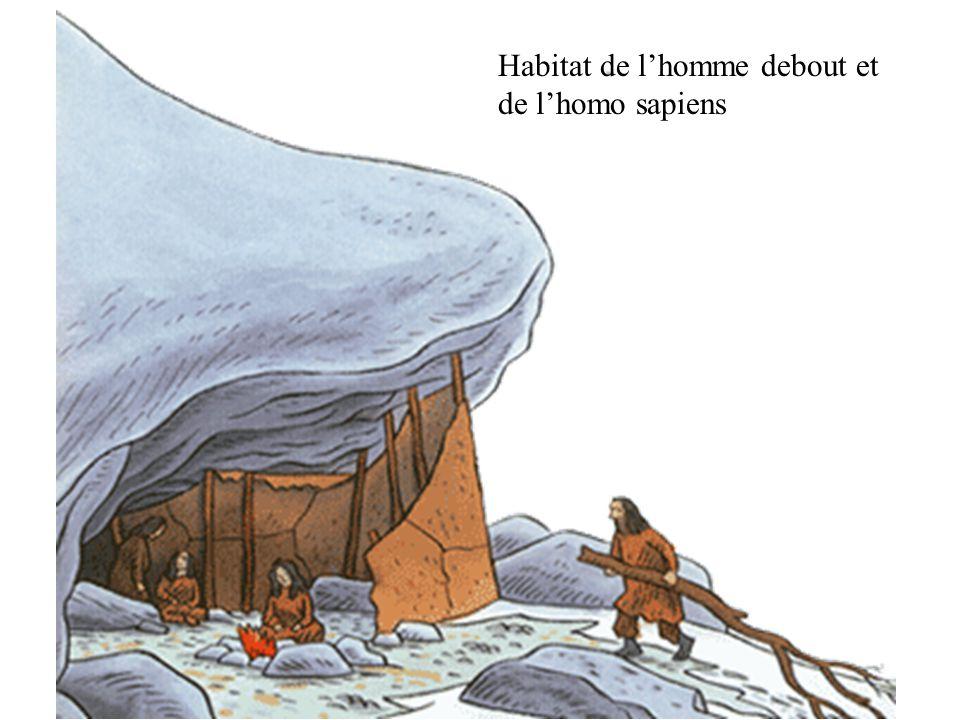 Habitat de l'homme debout et de l'homo sapiens