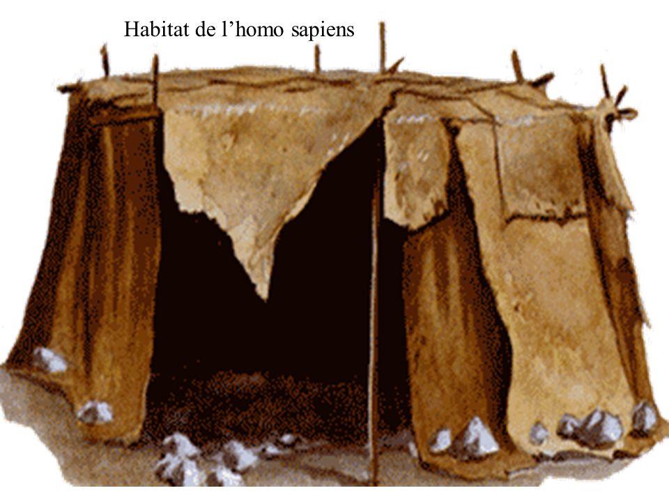 Habitat de l'homo sapiens