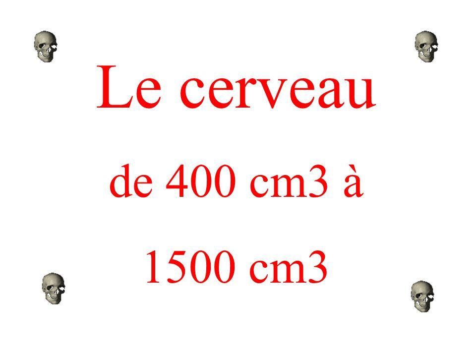 Le cerveau de 400 cm3 à. 1500 cm3.