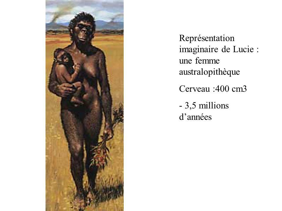 Représentation imaginaire de Lucie : une femme australopithèque