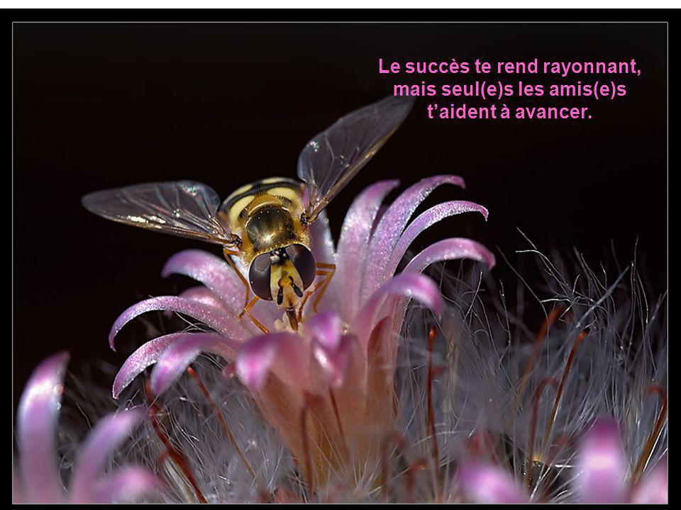 Le succès te rend rayonnant, mais seul(e)s les amis(e)s t'aident à avancer.