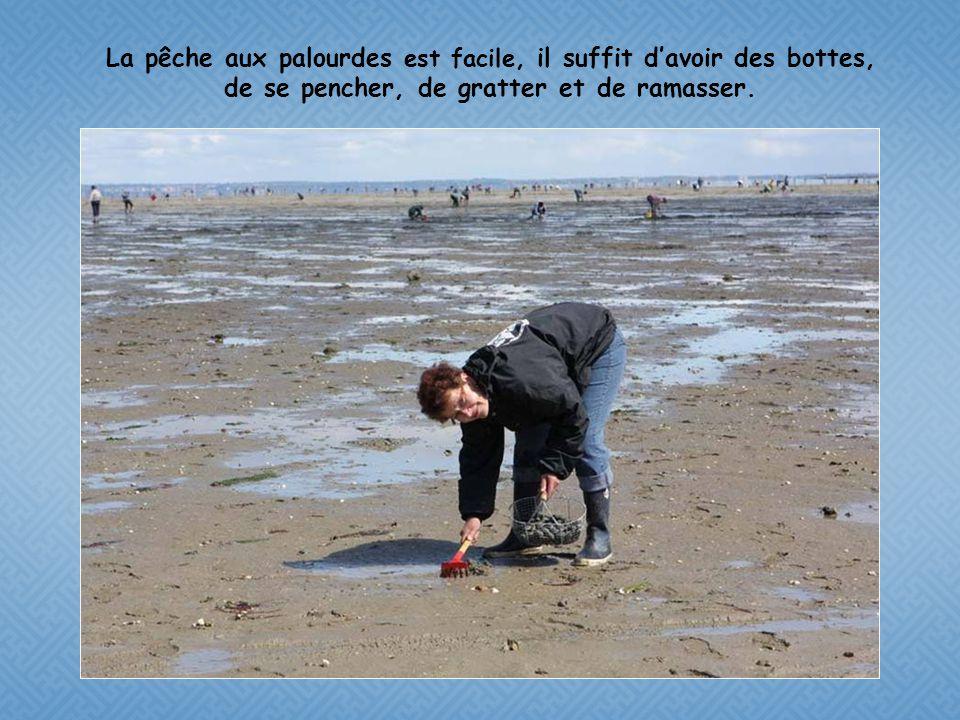 La pêche aux palourdes est facile, il suffit d'avoir des bottes, de se pencher, de gratter et de ramasser.