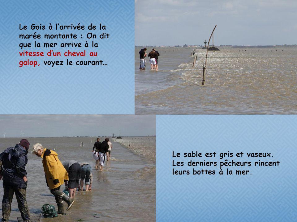 Le Gois à l'arrivée de la marée montante : On dit que la mer arrive à la vitesse d'un cheval au galop, voyez le courant…