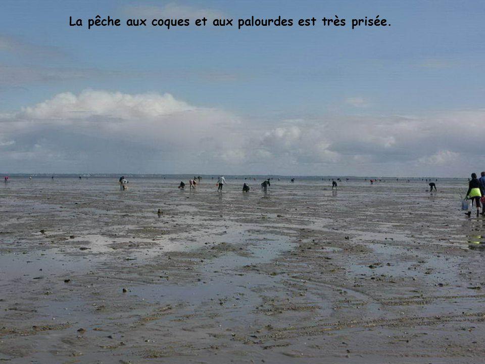 La pêche aux coques et aux palourdes est très prisée.
