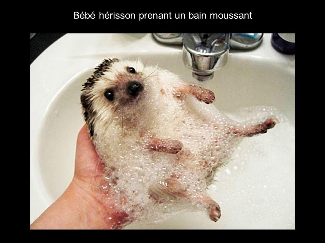 Bébé hérisson prenant un bain moussant