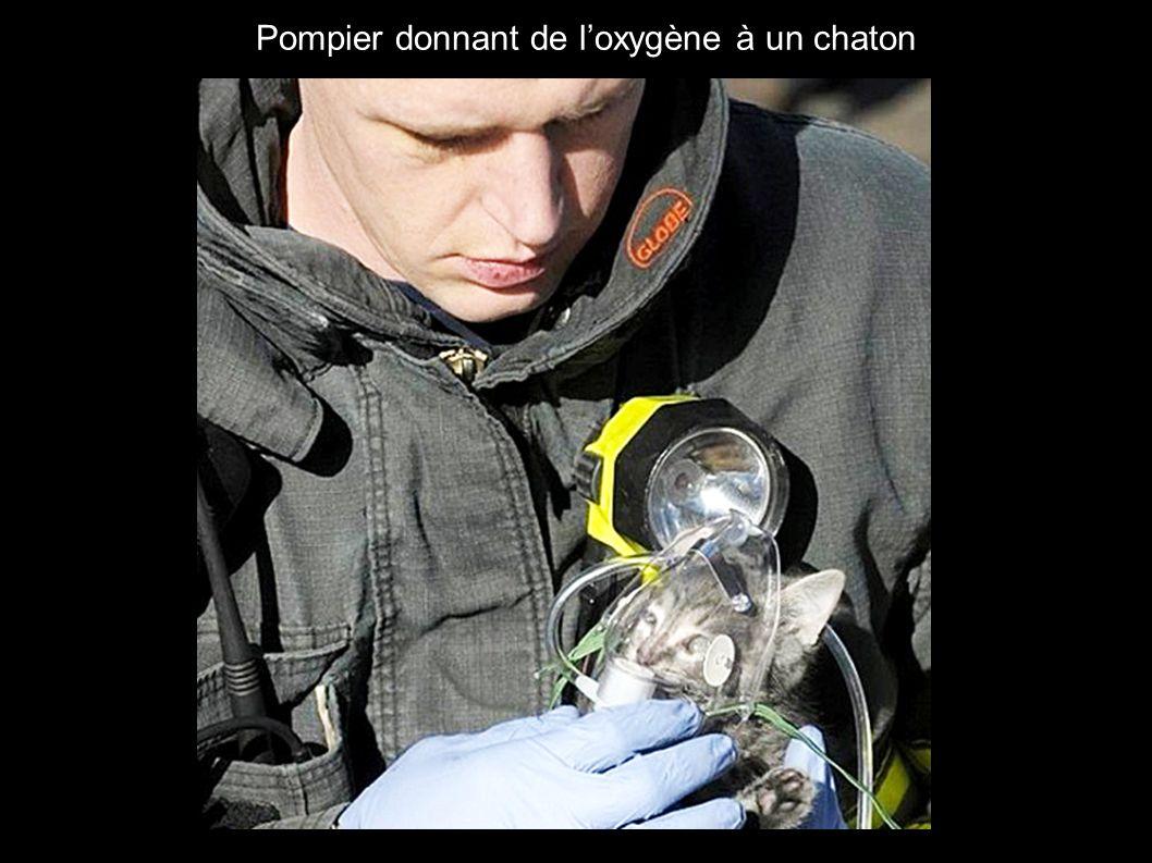 Pompier donnant de l'oxygène à un chaton