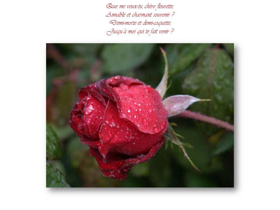 Que me veux-tu, chère fleurette, Aimable et charmant souvenir