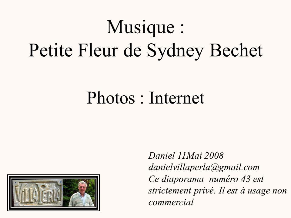 Musique : Petite Fleur de Sydney Bechet