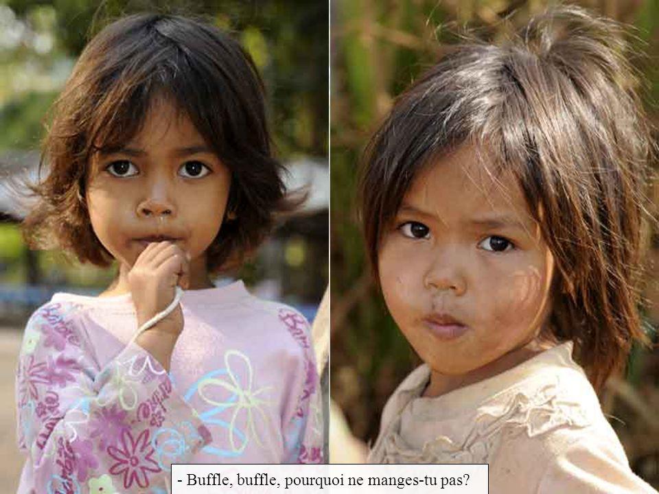 - Buffle, buffle, pourquoi ne manges-tu pas