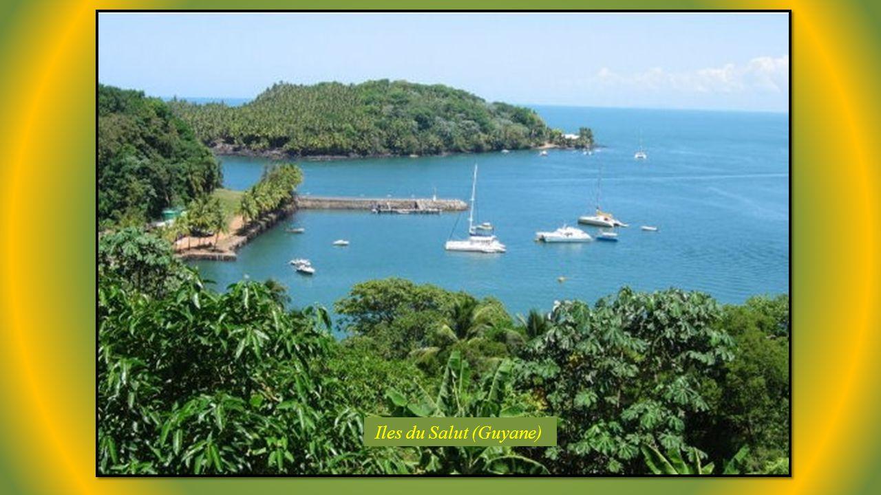 Iles du Salut (Guyane)